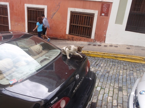 In San Juan there where few dogs but enough cats they where falling from the sky. They where everywhere.