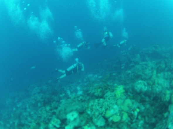 Diving in Bonaire at 50 Feet