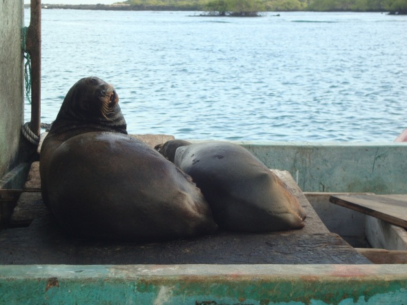 The Sea lions sleeping on the boats! Oops