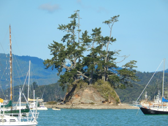 Odd Island in Opua Harbor