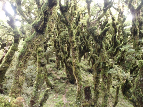 As I hiked I would dip down into areas of tree line that were covered by moss and gave me the chills.