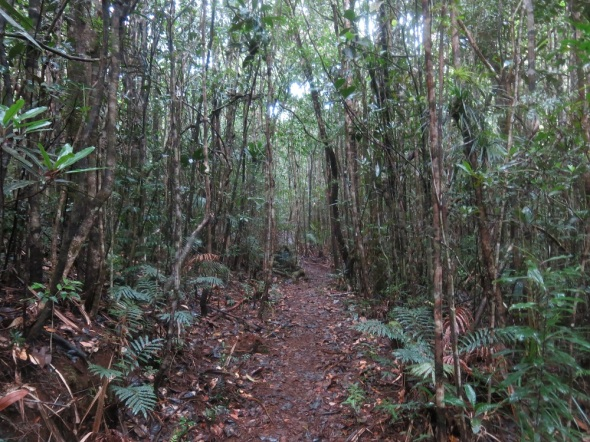 As we hiked up the Moutain we entered a botanical forest full of birds talking and singing.