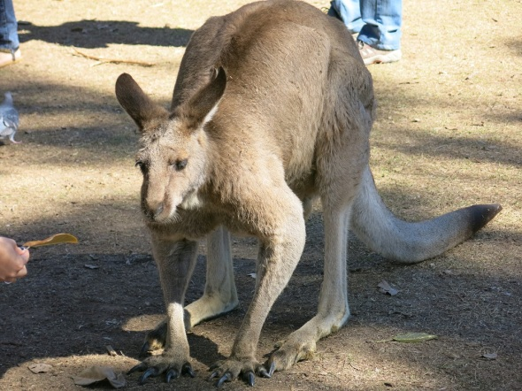 I learned that Kangaroo makes great sandwiches, yum!