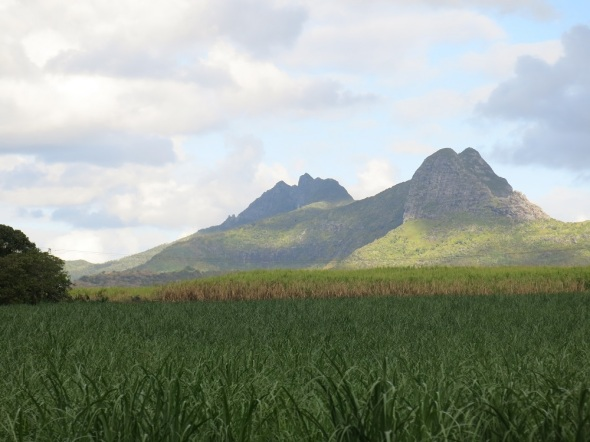 As we drove around the whole island it was covered in sugar cane flied being grown and harvested. It is still there number one export product.